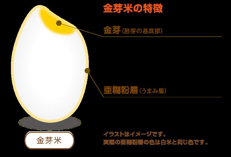 金芽米と白米と玄米